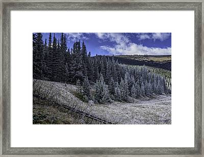 Frosty Pines Framed Print by Tom Wilbert