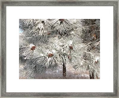 Frosty Pinetree Framed Print by Steven Parker