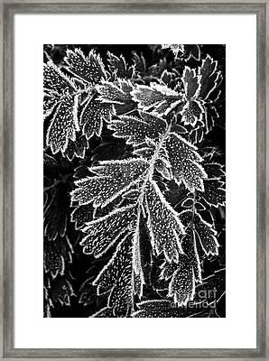 Frosty Plants  Framed Print by Elena Elisseeva