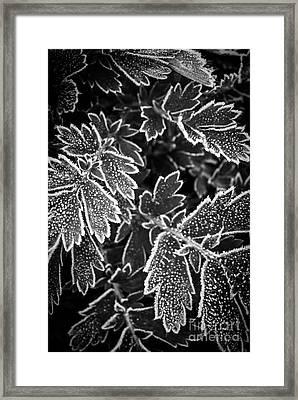 Frosty Plants In Fall Framed Print by Elena Elisseeva