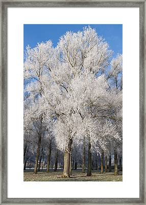 Frosty Trees Framed Print