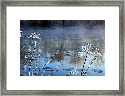 Frosty Webs And Weeds Framed Print by Hanne Lore Koehler