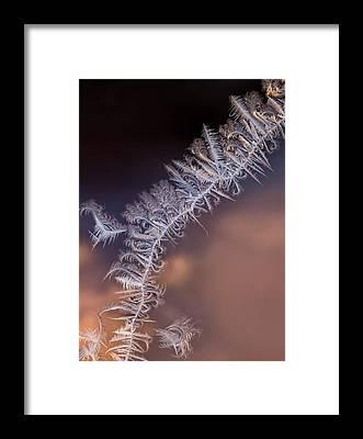 Hoar Frost Framed Prints
