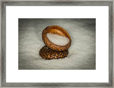 Frozen Acorn Cupule Framed Print by Paul Freidlund