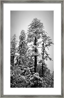 Frozen Beauty Framed Print by Betty Depee