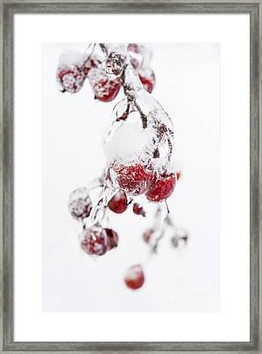 Frozen Crab Apples Framed Print by Elena Elisseeva