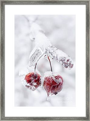 Frozen Crab Apples On Icy Branch Framed Print by Elena Elisseeva
