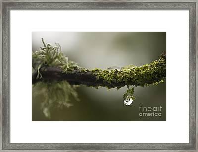 Frozen Droplet Framed Print by Anne Gilbert