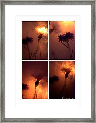 Frozen Flowers Collage Framed Print by Randi Grace Nilsberg