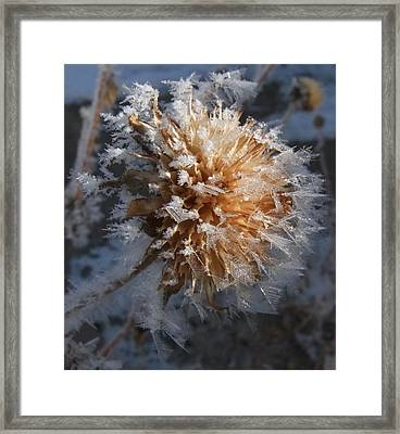 Frozen Fog Framed Print by Kae Cheatham