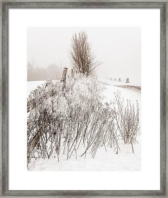 Frozen Fog On A Hedgerow - Bw Framed Print