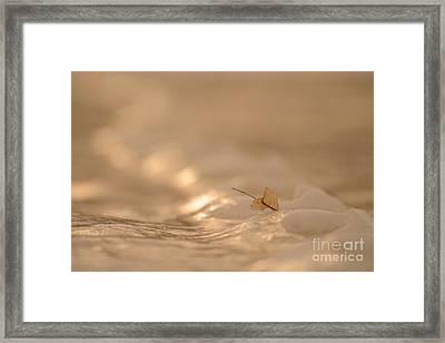Frozen Footprints Framed Print