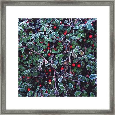 Frozen Fruit Tree Framed Print by Romy Lahoud / Eyeem