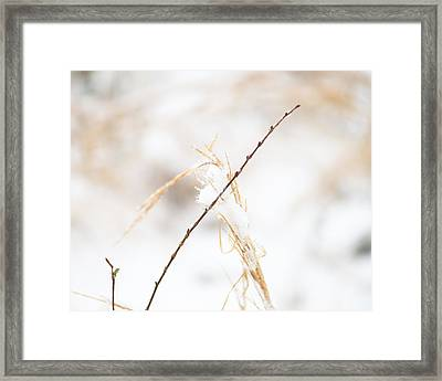 Frozen Grass And Twig Framed Print by David Waldo