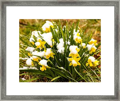 Framed Print featuring the photograph Frozen In Time by Cathy Donohoue