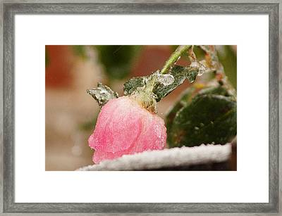 Frozen In Time Framed Print by Kathy Churchman