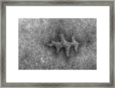 Frozen In Time Framed Print by Randy Steele