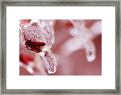 Framed Print featuring the photograph Frozen Jewel  by Debbie Oppermann