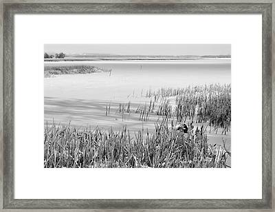 Frozen Lake And Ice Coated Bullrushes Framed Print