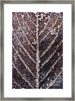 Frozen Leaf Framed Print by Anne Gilbert