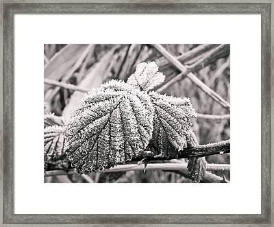 Frozen Leave Framed Print