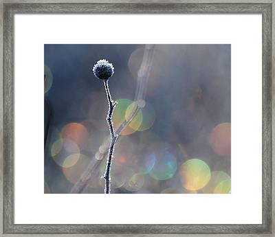 Framed Print featuring the photograph Frozen Orb by Paul Noble