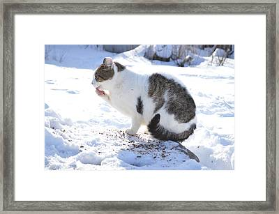 Frozen Paws Framed Print by Dacia Doroff