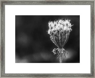 Framed Print featuring the photograph Frozen Queen by Melanie Lankford Photography