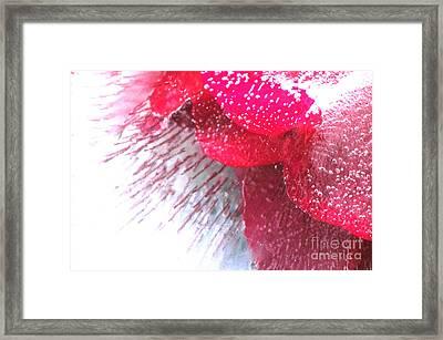 Frozen Rose Framed Print by Randi Grace Nilsberg