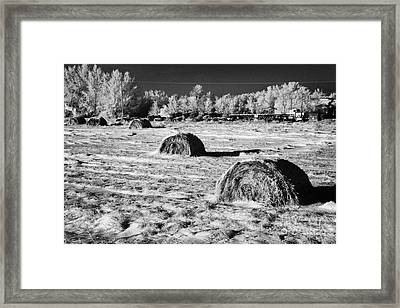 frozen snow covered hay bales in a field Forget Saskatchewan Canada Framed Print
