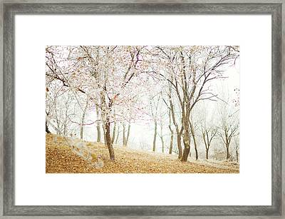 Frozen Spring Framed Print by Silvia Floarea Toth