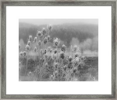 Frozen Teasel Framed Print by Jean Noren