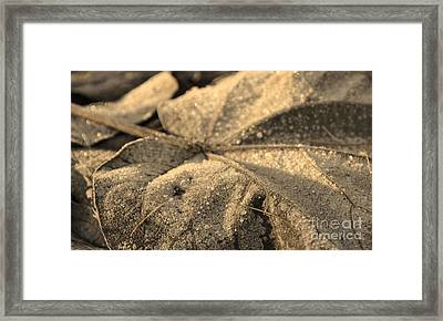 Frozen Time Framed Print