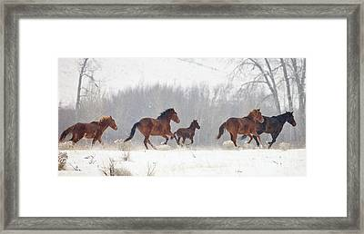 Frozen Track Framed Print by Mike  Dawson
