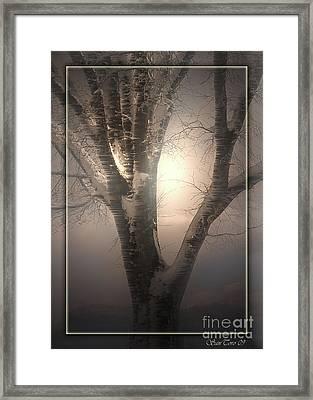 Frozen Tree Framed Print