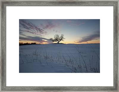 Frozen Tree Of Wisdom Framed Print by Aaron J Groen
