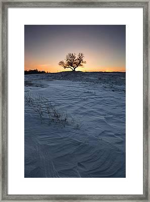 Frozen Tree Of Wisdom Framed Print