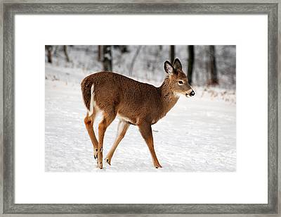 Deer On Snowy Landscape Framed Print