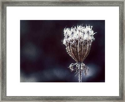 Framed Print featuring the photograph Frozen Wisps by Melanie Lankford Photography