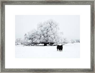 Frozen World Framed Print by Mike  Dawson