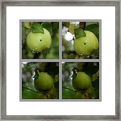 Frucht  Framed Print