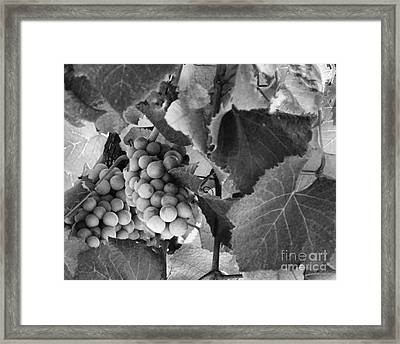 Fruit -grapes In Black And White - Luther Fine Art Framed Print by Luther Fine Art