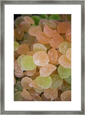 Fruit Jellies, Zaragoza, Aragon, Spain Framed Print