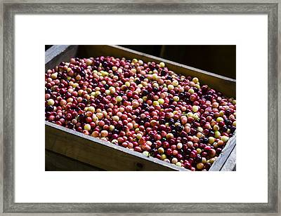 Fruit Of The Bog Framed Print by Andrew Pacheco