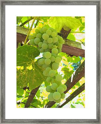 Fruit Of The Vine - Garden Art For The Kitchen Framed Print by Brooks Garten Hauschild