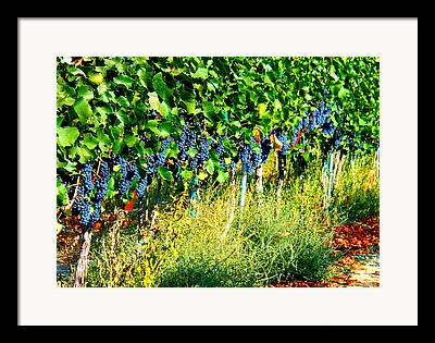 Windy Point Vineyards Photographs Framed Prints