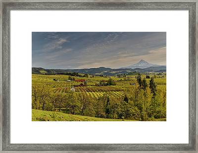 Fruit Orchards And Mount Hood Evening Framed Print