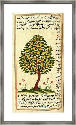 Fruit Tree Framed Print by British Library