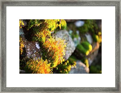 Fruiting Bodies On Moss Framed Print
