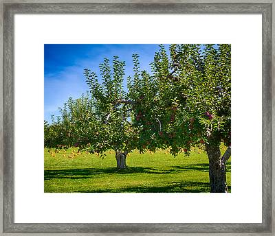 Fruits And Vegetables Framed Print by Fred Larson